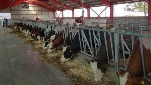 Ferma Rugan: 50 de vaci, un singur angajat si trei roboti care fac toata treaba!