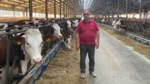 """Si rasele mixte au productii bune la lapte! Vaca Montbeliarde cu 55 litri de lapte pe zi in """"Ferma Baciu""""!"""