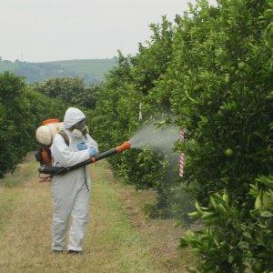 Planul UE pentru introducerea agriculturii ecologice in peisajul European: utilizarea pesticidelor poate fi restrictionata